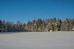 33c 1月横向俄国温度ural冬天 晴朗的日 冬天衰落 明亮的颜色 简单的风景 冬天森林森林公路 冬天fild 库存图片
