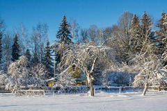 33c 1月横向俄国温度ural冬天 晴朗的日 冬天衰落 明亮的颜色 简单的风景 冬天森林森林公路 冬天fild 免版税图库摄影