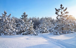 33c 1月横向俄国温度ural冬天 本质的构成 库存照片