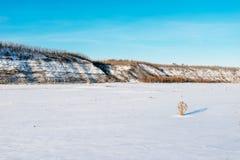 33c 1月横向俄国温度ural冬天 本质的构成 免版税图库摄影