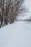 33c 1月横向俄国温度ural冬天 杉木在雪之下的分行结构树 免版税库存照片