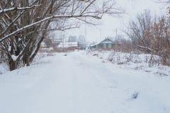 33c 1月横向俄国温度ural冬天 杉木在雪之下的分行结构树 库存照片