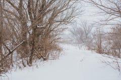 33c 1月横向俄国温度ural冬天 杉木在雪之下的分行结构树 库存图片