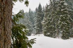 33c 1月横向俄国温度ural冬天 结构树和雪 图库摄影