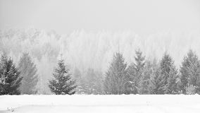 33c 1月横向俄国温度ural冬天 树冰和空的雪原的平静的森林 库存照片