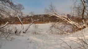 33c 1月横向俄国温度ural冬天 树和冻湖在雪下 图库摄影