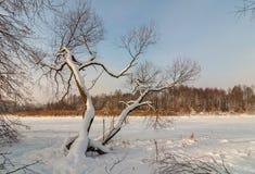 33c 1月横向俄国温度ural冬天 树和冻湖在雪下 库存图片