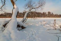 33c 1月横向俄国温度ural冬天 树和冻湖在雪下 免版税库存图片