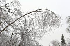 33c 1月横向俄国温度ural冬天 树的上面在雪的 免版税库存图片