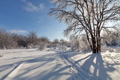 33c 1月横向俄国温度ural冬天 森林和树在雪 图库摄影