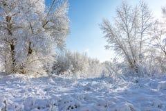 33c 1月横向俄国温度ural冬天 森林沼地撒布与雪 库存图片