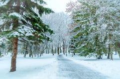 33c 1月横向俄国温度ural冬天 沿冬天公园的斯诺伊树 库存图片