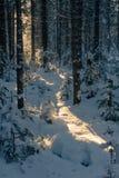 33c 1月横向俄国温度ural冬天 清楚的冷淡的天,自然 免版税库存图片