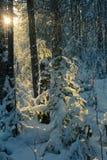 33c 1月横向俄国温度ural冬天 清楚的冷淡的天,自然 免版税库存照片