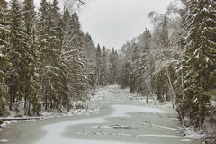 33c 1月横向俄国温度ural冬天 湖在冻森林里 免版税库存图片