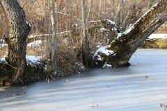 33c 1月横向俄国温度ural冬天 湖用与生长在雪的中部的树的冰盖 免版税图库摄影