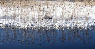 33c 1月横向俄国温度ural冬天 烘干钩针编织 反映在水中 全景 库存照片