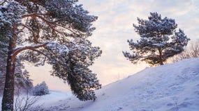 33c 1月横向俄国温度ural冬天 用雪和树盖的雪漂泊 免版税库存图片