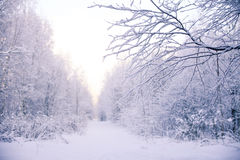 33c 1月横向俄国温度ural冬天 冻结的森林 免版税图库摄影