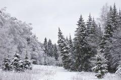33c 1月横向俄国温度ural冬天 冻结的森林 图库摄影