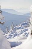 33c 1月横向俄国温度ural冬天 积雪的云杉和随风飘飞的雪 免版税图库摄影