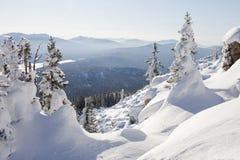 33c 1月横向俄国温度ural冬天 积雪的云杉和随风飘飞的雪 库存照片