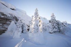 33c 1月横向俄国温度ural冬天 积雪的冷杉木和岩石 库存照片