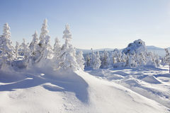 33c 1月横向俄国温度ural冬天 积雪的冷杉木和岩石 库存图片