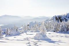 33c 1月横向俄国温度ural冬天 积雪的冷杉木和岩石 免版税库存图片