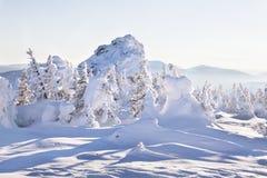 33c 1月横向俄国温度ural冬天 积雪的冷杉木和岩石 免版税库存照片