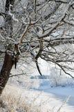 33c 1月横向俄国温度ural冬天 积雪的树枝和植物 小结冰的河在中部 免版税库存图片