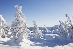 33c 1月横向俄国温度ural冬天 积雪的森林山脉Zuratkul 图库摄影