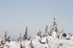 33c 1月横向俄国温度ural冬天 积雪的森林山脉Zuratkul 免版税库存图片