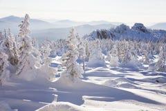 33c 1月横向俄国温度ural冬天 积雪的森林山脉Zyuratkul 免版税图库摄影
