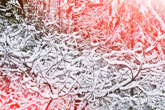 33c 1月横向俄国温度ural冬天 积雪的草 库存图片