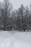 33c 1月横向俄国温度ural冬天 积雪的足迹、光秃的树和降雪 图库摄影