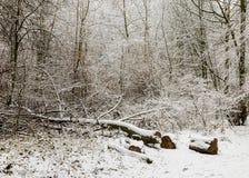 33c 1月横向俄国温度ural冬天 结构树和雪 免版税库存图片