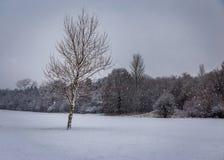 33c 1月横向俄国温度ural冬天 结构树和雪 库存照片