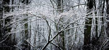 33c 1月横向俄国温度ural冬天 结构树和雪 库存图片