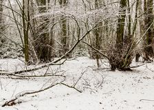 33c 1月横向俄国温度ural冬天 结构树和雪 免版税库存照片