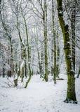 33c 1月横向俄国温度ural冬天 结构树和雪 免版税图库摄影