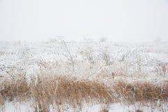 33c 1月横向俄国温度ural冬天 冻草甸花 免版税库存照片
