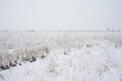 33c 1月横向俄国温度ural冬天 冻草甸花 图库摄影
