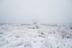 33c 1月横向俄国温度ural冬天 冻草甸花 免版税库存图片