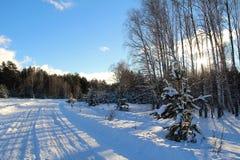 33c 1月横向俄国温度ural冬天 路在冬天森林里在一个晴天 库存照片