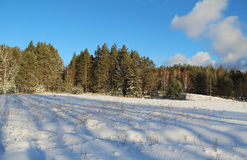 33c 1月横向俄国温度ural冬天 路在冬天森林里在一个晴天 免版税图库摄影