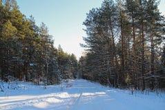 33c 1月横向俄国温度ural冬天 路在冬天森林里在一个晴天 免版税库存照片