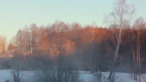 33c 1月横向俄国温度ural冬天 金黄色的树在用雪盖的冬天森林里 股票录像