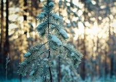 33c 1月横向俄国温度ural冬天 阿尔卑斯包括房子场面小的雪瑞士冬天森林 免版税图库摄影