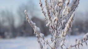 33c 1月横向俄国温度ural冬天 阿尔卑斯包括房子场面小的雪瑞士冬天森林 股票视频